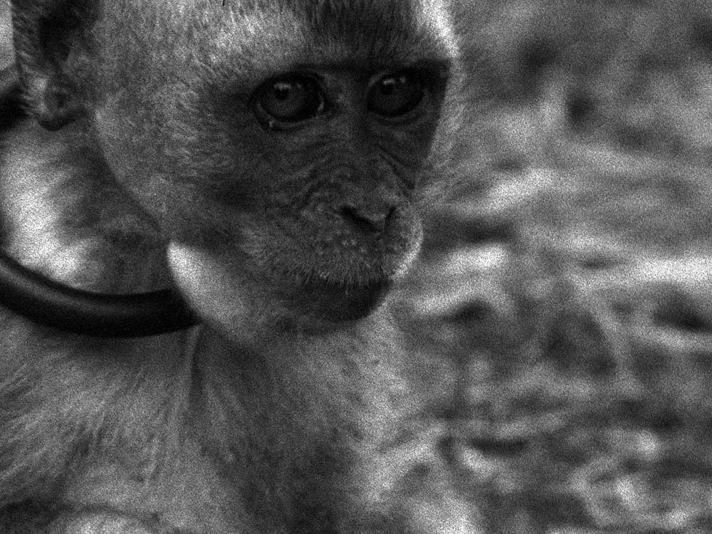 The Masked Monkeys