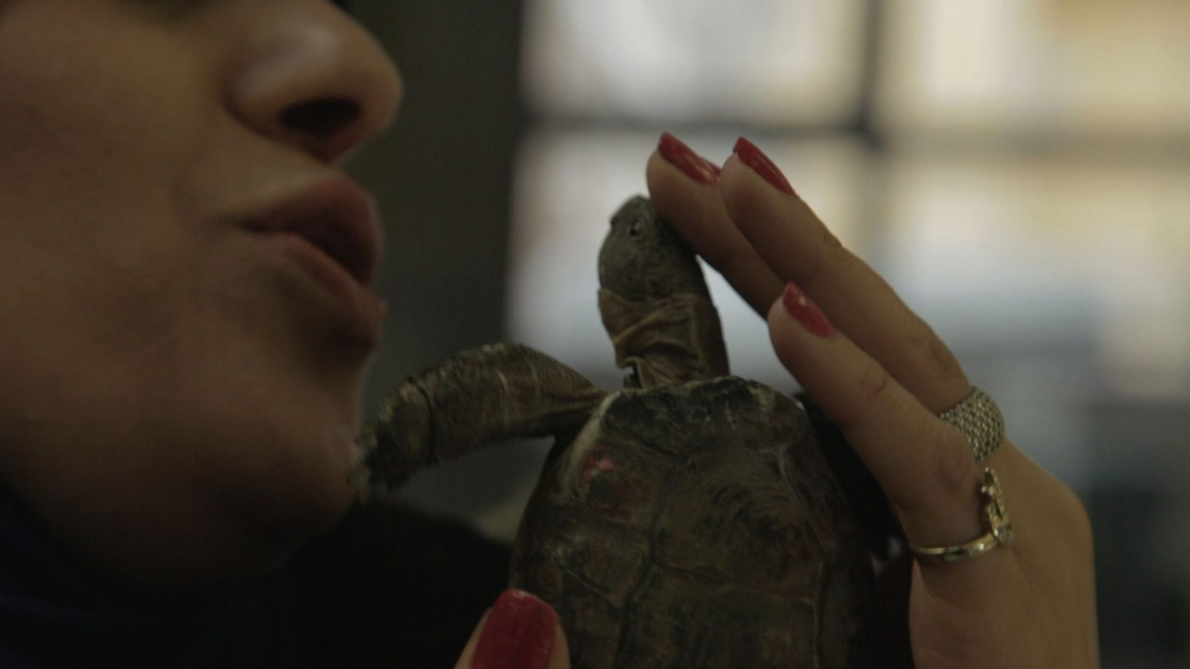 Schildkröten Panzer