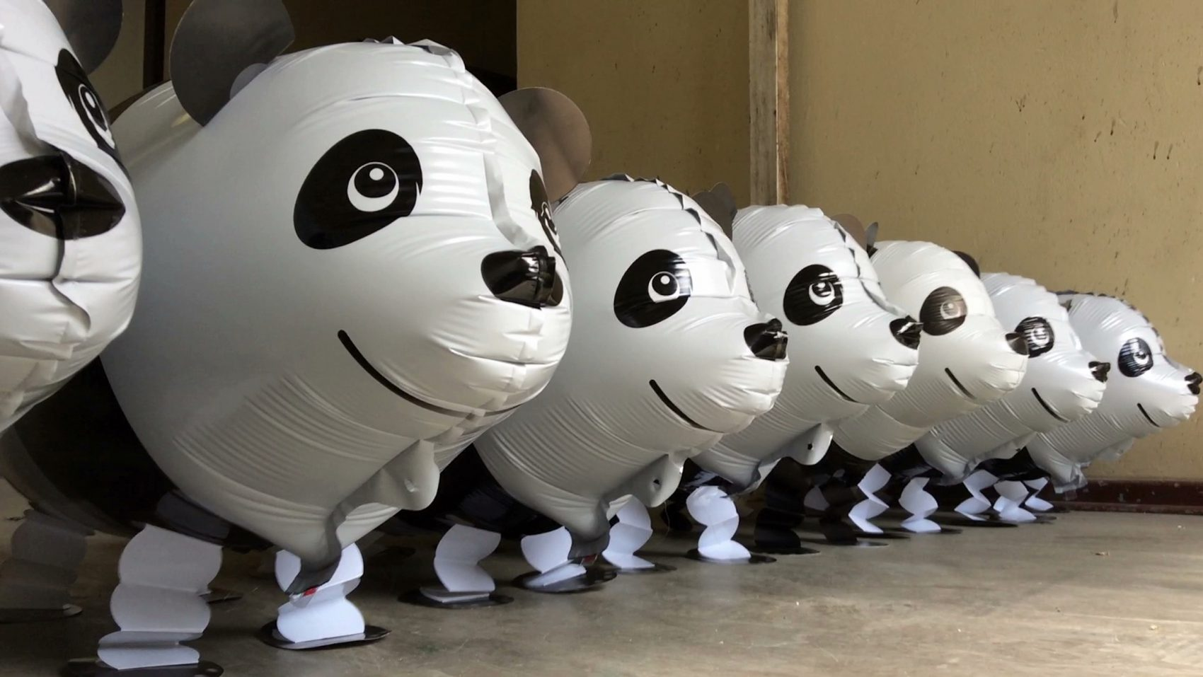 Panda Moonwalk or Why Meng Meng Walks Backwards